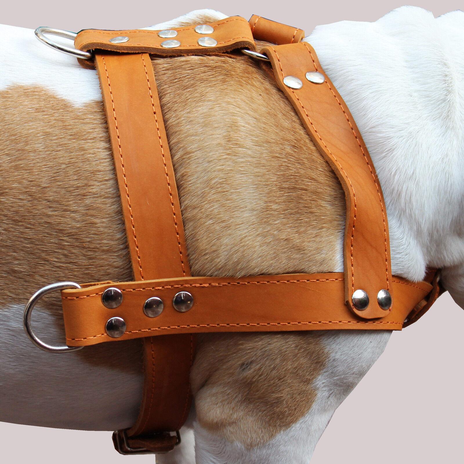 Real Leather Dog Pulling Harness 33 -37  chest size Mastiff Cane Corso XLarge
