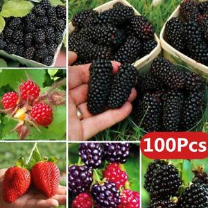 Am-100Pc-Rare-Raspberry-Blackberry-Strawberry-Kiwi-Seeds-Nutritious-Fruits-Bons