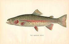 Rare 1892 Antique Denton Fish Print ~ Rainbow Trout ~ Excellent Details!