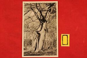 Postkarte-Ansichtskarte-Sachsen-Prerow-im-Naturschutzgebiet-Darfz-im-Darfzwald