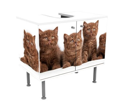 Badunterschrank Portrait von sechs braunen britischen Kätzchen Designschrank Ba
