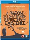 Pigeon SAT on a Branch Reflecting on Existence 5021866150406 Blu-ray Region B