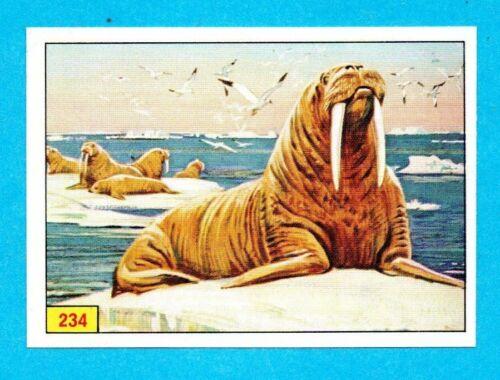 MAMMIFERI-PANINI 1976-FIGURINA a scelta-STICKER at choice-Recuperata B