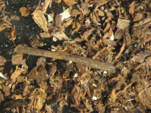 Pleistocene Cromer Forest plant debris grass leaves twig microfossils England