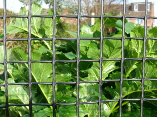 Plant Support Netting 1x25m Plastic Garden Fencing 20mm Hole Mesh Clematis Net