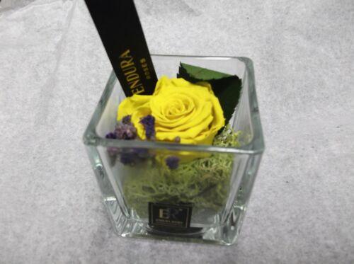 Notion par Endura roses 100/% naturels préservés dernière jusqu/'à 3 ans