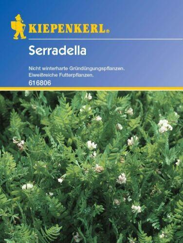 Ornithopus sativus 616806 Gründünger Futterpflanze Kiepenkerl Serradella