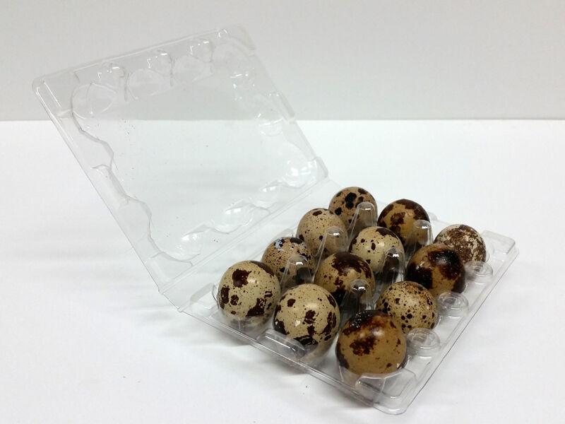 Quail Egg Cartons x 50pcs FREE SHIPPING