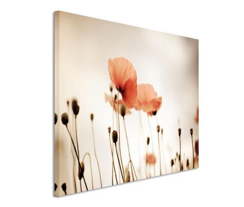 Leinwandbild 120x80cm auf Keilrahmen orange,Blume,Mohnblume,