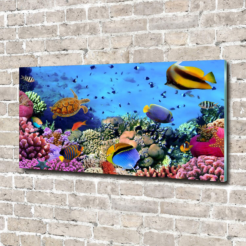 Glas-Bild Wandbilder Druck auf Glas 140x70 Deko Tiere Korallenriff