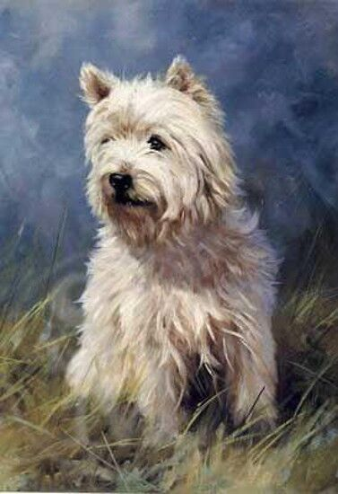 Westies Collection On Ebay