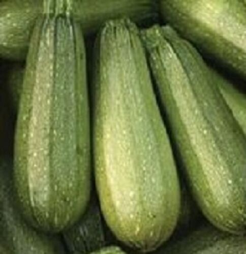 100 Zucchini Seeds Zucchini Grey Summer Squash SEEDS