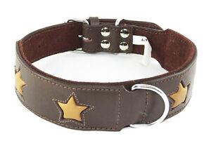 Collier de chien Staffie marron avec étoiles bronzées Staffy Staffordshire Bull Terrier