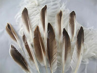 12 Pcs.4-7 Natural Brown & White Duck Wing Pointer Feathers-us Seller