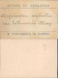 REGIA UNIVERSITA' DI NAPOLI, MUSEO DI GEOLOGIA PRIMI 900 TESSERA N.5 - Italia - REGIA UNIVERSITA' DI NAPOLI, MUSEO DI GEOLOGIA PRIMI 900 TESSERA N.5 - Italia