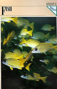 Wildlife-Fact-File-Fish-Wild-Animals-School-Nature-Collectors-From-1-to-45