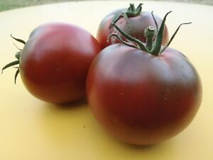20-Graines-seeds-de-tomate-chinoise-Bio