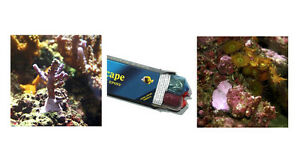 Charmant Image Is Loading D D Aquascape Construction Epoxy Coralline Algae Colour 4oz