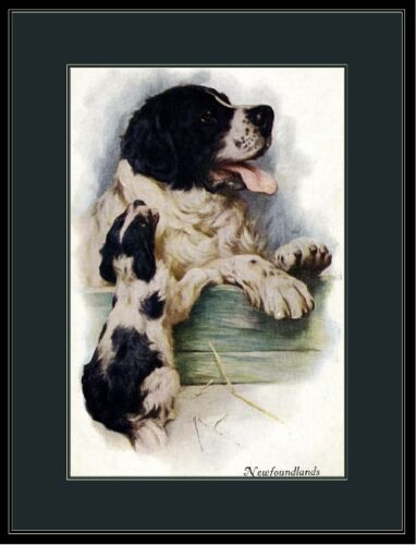 Picture Print Newfoundland Mother Dog Puppy Art