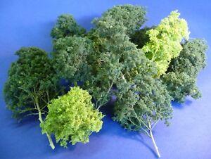 24-STUCK-Jordan-Baum-NATURBAUME-GRUN-zum-SONDERPREIS-15cm-hoch-034-SEHR-SCHON-034-4B-2