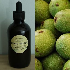 Black-Walnut-Extract-Tincture-4-oz-Parasite-Cleanse-Remedy-Green-Forest-Hideaway