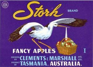 SALE-Vintage-Tasmania-Apple-Case-Labels-Fruit-Art-Poster-034-baker-039-s-dozen-034-P-13