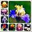 Iris-Fleurs-Orchidee-Bonsai-100-Pcs-Graines-rares-Heirloom-PLANTES-VIVACES-JARDIN-S miniature 1