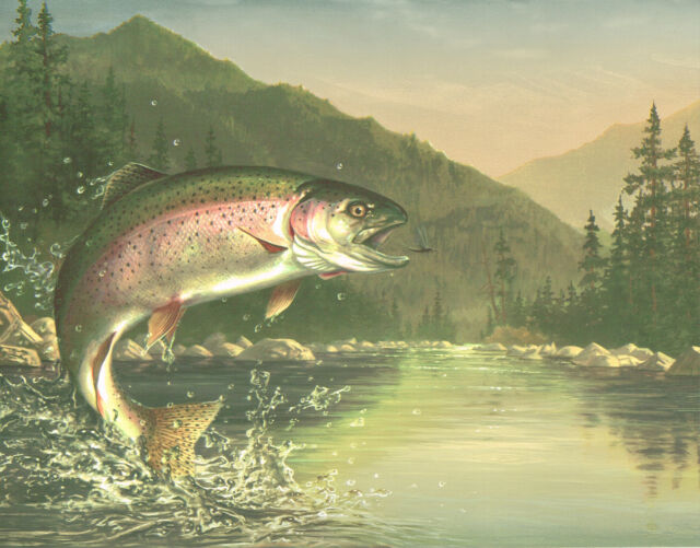 CHECK OUT THAT RAINBOW TROUT AFTER THE FLY WHAT A BEAUTI Wallpaper bordeR Wall