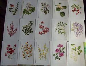 15-Ancienne-Affiches-Scolaire-Botanique-1972-Chevrefeuilles-Catalpa-Kiwi-Fusain
