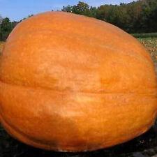 15 Pumpkin BIG MAX SeedsNON-GMOFresh Vegetable Garden Seeds US SELLER