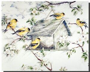 Gold-Finches-Wild-Birds-In-Snow-Feeder-Animal-Picture-Art-Print-8x10