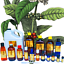 3ml-Essential-Oils-Many-Different-Oils-To-Choose-From-Buy-3-Get-1-Free thumbnail 30