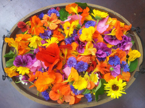 Pot Mandarin balcony Tagetes tenuifolia EDIBLE mini flower rooms Orange