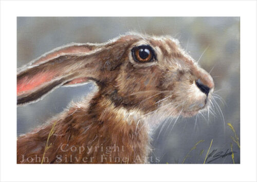 WILD HARE PORTRAIT by JOHN SILVER SIGNED A4 or A3 SIZE PRINT HA003SP