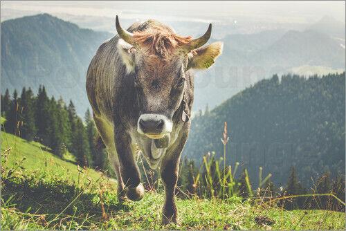 Michael Helmer Premium-Poster Allgäuer Kuh in den Bergen
