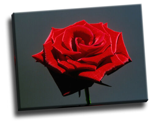 Red Rose Giclee Canvas Picture Poster Art