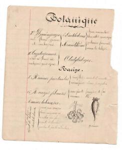 c1890-science-manuscript-document-BOTANY-MOLLUSC-handmade-illustration-drawing