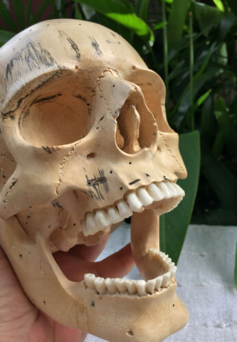 Hand Carved Wooden Sculpture Human Size Skull Realistic flexible Jaws Carving