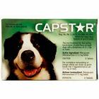 Capstar Oral Flea Treatment for Dogs - CA4920Y07AM
