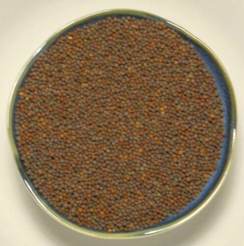 Heirloom Root Vegetable Seeds Purple Top White Globe Turnip Seed ½oz to 8oz