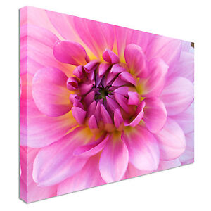 Pink Dahlia Closeup Flower Canvas Wall Art prints high quality