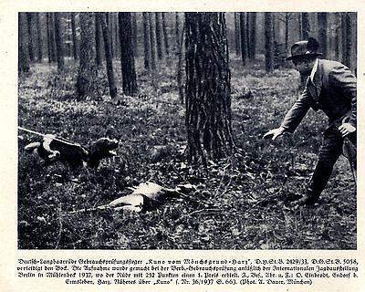 Schnelle Lieferung Kuno Von Mönchsgrund-harz Deutsch-langhaar Jagdhunde & Züchter 1930-40 Unterscheidungskraft FüR Seine Traditionellen Eigenschaften