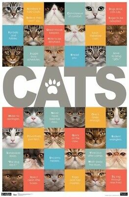CATS /& KITTENS COLLAGE 22x34 POSTER Super Cute NEW//ROLLED!