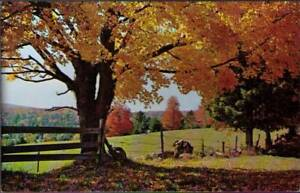 uy2-Postcard-A-Typical-New-England-Fall-Scene