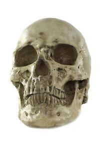 Halloween-Skull-Skull-Human-Skull-Skull-Gerippe-VQ-057