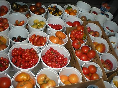 MIX OF 165 DIFFERENT KINDS OF TOMATOES! SEE LISTING FOR LIST OF ALL VARIETY'S!
