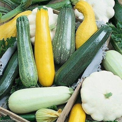 Summer Melody Mix 100 Seed-Golden Zucchini, Black Beauty,Grey Zucchini,Scallop .