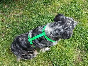 Adjustable-Dog-Harness-Metal-Hardware-USA-Made-5-Sizes