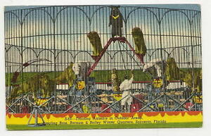 SARASOTA-FL-Ringling-Circus-Training-Animals-Postcard