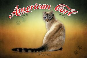 American-Curl-Chat-Pancarte-en-Tole-Signe-Metal-Voute-Etain-20-X-30-cm-CC0351